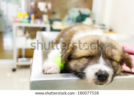 cute puppy(Thai Bangkaew Dog) ill and sleep on operating table in veterinarian's clinic - stock photo