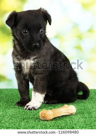 Cute puppy with bone on green grass outdoor - stock photo