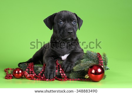 Cute Puppy with fir branches on a green background - stock photo