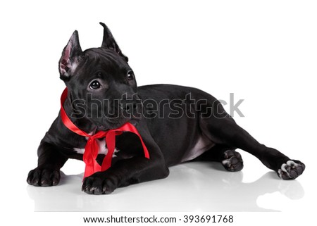 Cute puppy with red ribbon on a white background - stock photo