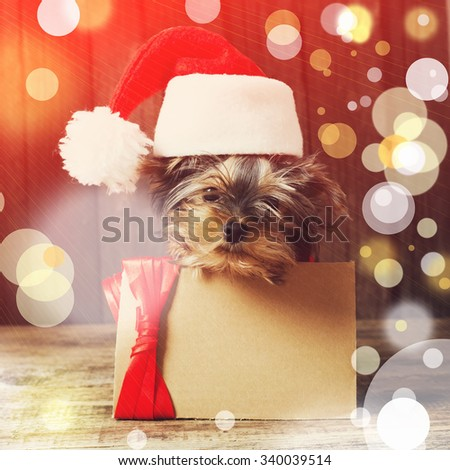 Cute Puppy Yorkshire terrier with a card in Santa hat at Christmas - stock photo
