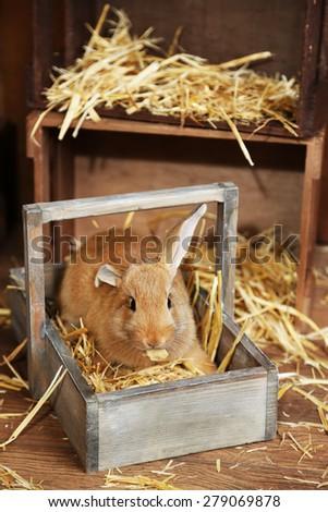 Cute rabbit in barn, close up - stock photo