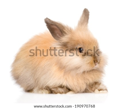Cute rabbit in profile. isolated on white background