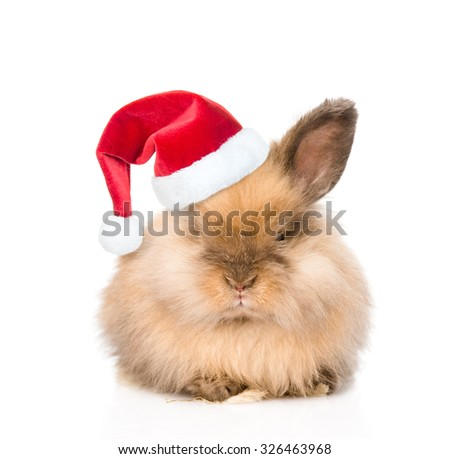 Cute rabbit in red christmas hat. isolated on white background