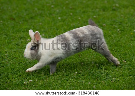 Cute Rabbit Jumping on Green Grass - stock photo