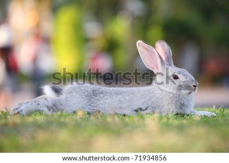 cute rabbit relax on grass. - stock photo