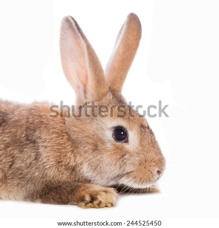 Cute rabbit sitting against the white background - stock photo
