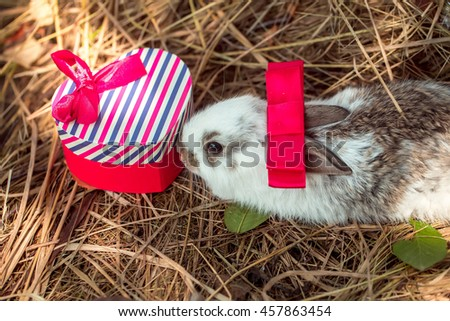 Cute rabbit with red bow sniffs gift box heart shaped of striped wrapper on natural background