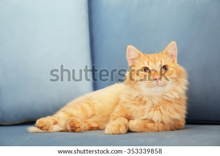 Cute red cat laying on grey sofa - stock photo