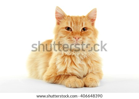 Cute red cat lying isolated on white background - stock photo