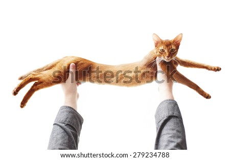 Cute red cat playing - stock photo