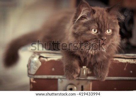 cute red-haired cat climbed up into a suitcase - stock photo