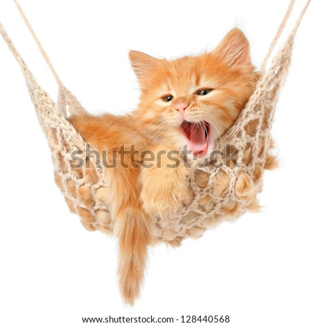 Cute red-haired kitten in hammock on a white background. - stock photo