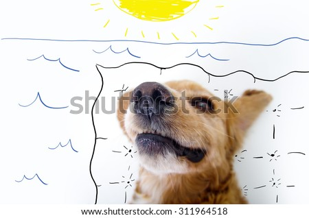 Cute relaxing English Cocker Spaniel puppy in front of a white background with beach setting sketch. - stock photo
