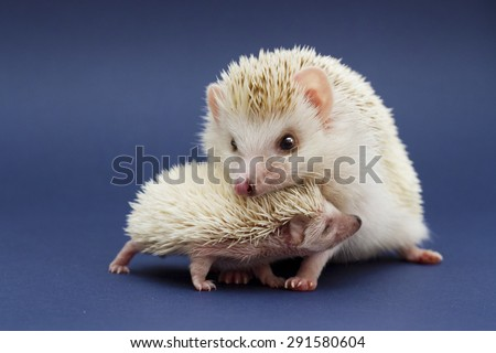 cute rodent hedgehog love with baby - stock photo