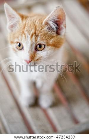 Cute rusty kitten - stock photo