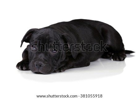 Cute sad puppy on a white background - stock photo