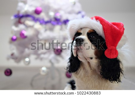 Most Inspiring Cavalier Canine Adorable Dog - stock-photo-cute-santa-cavalier-dog-with-red-hat-with-christmas-tree-in-background-1022430883  Gallery_201417  .jpg