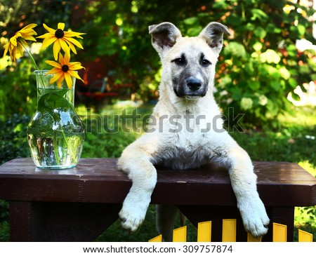 cute shepherd puppy with flowers on the summer garden background - stock photo
