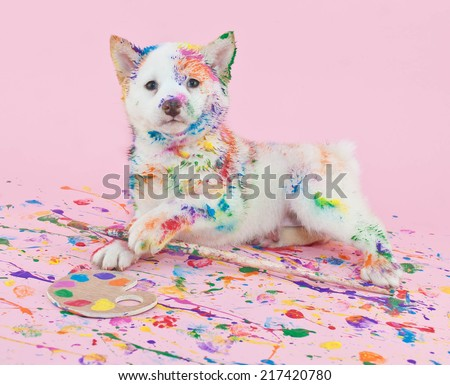 Cute Shiba Inu puppy that looks like she had lots of fun in art class, making a mess with paint. - stock photo
