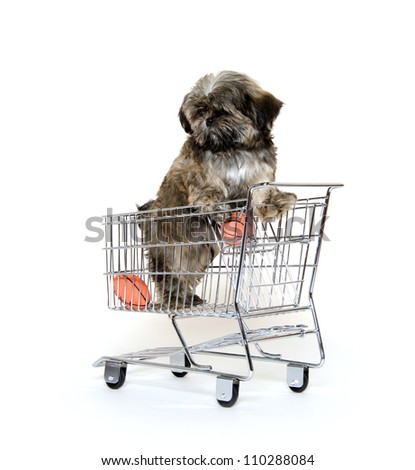 Cute shih tzu dog standing in a shopping cart on white background - stock photo