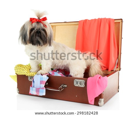 Cute Shih Tzu in suitcase with clothes isolated on white - stock photo
