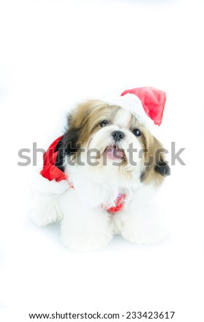 Cute shih tzu puppy in christmas theme