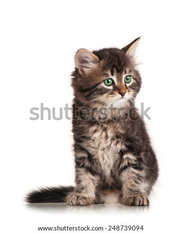 Cute siberian kitten looks up isolated on a white background - stock photo