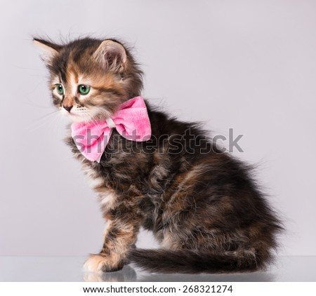 Cute siberian kitten  with a plush bow on a neck over grey background - stock photo