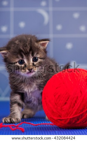 Cute siberian kitten with bright red yarn ball over light-blue background - stock photo