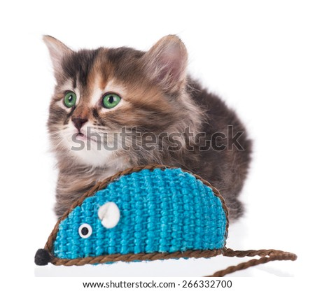 Cute siberian kitten with  toy mouse isolated on white background. Focus on the kitten - stock photo