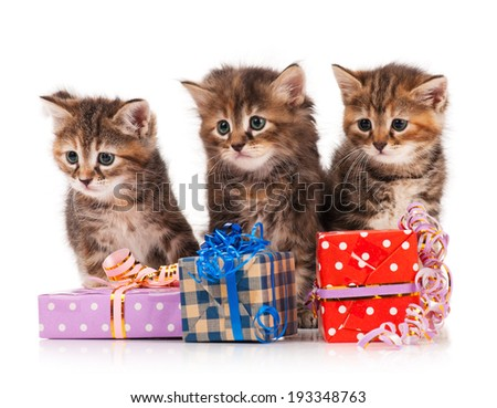 Cute siberian kittens with gift-box on a white background