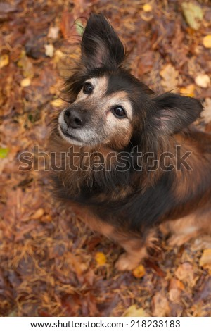 Cute sitting dog in the autumn forest