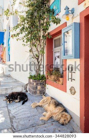 Cute sleeping dogs in shadow next to colorful wall at Santorini island, Greece.