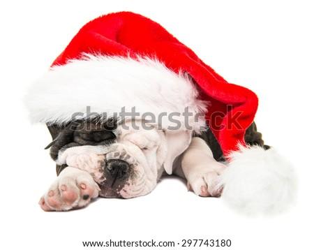 Cute sleeping english bulldog puppy wearing Santa's hat isolated on a white background - stock photo