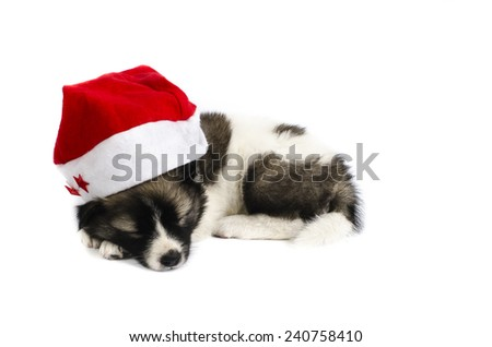 Cute sleeping puppy in a Christmas - Santa hat. Isolated on a white background - stock photo