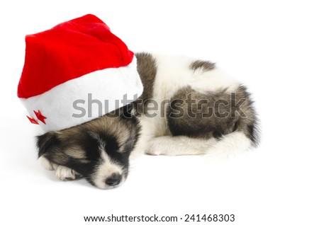 Cute sleeping puppy in a Christmas - Santa hat. Isolated on a white background