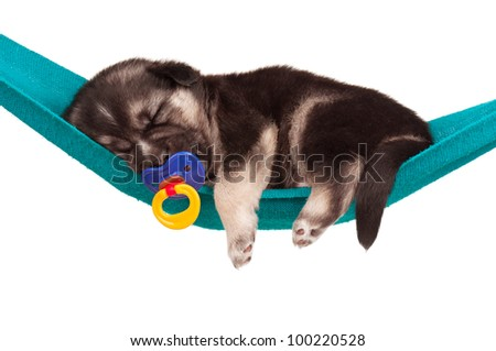 Cute sleeping puppy of 3 weeks old in a hammock on a white background - stock photo