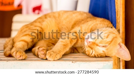 Cute small asian kitty sleeping on table, Thailand - stock photo
