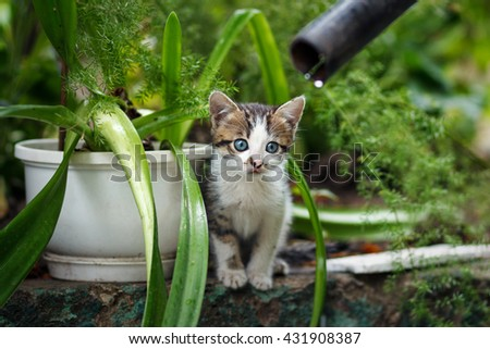 cute small gray kitten with beautiful striped color, white breast and paws against green summer bokeh background. portrait with shallow depth of field