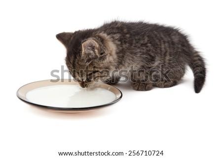 Cute small kitten licking milk isolated on plate - stock photo