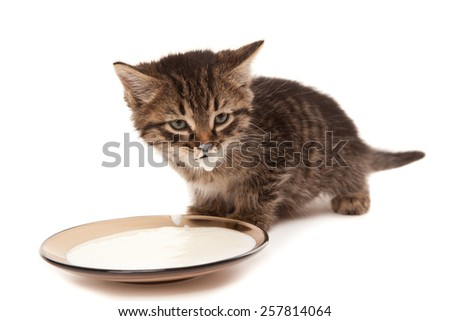 Cute small kitten with milk mustache isolated on white - stock photo