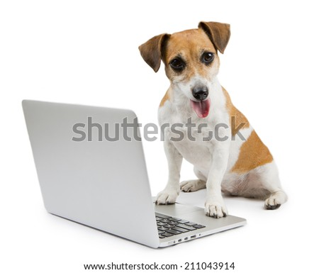 Cute smiling dog working laptop looking at the camera - stock photo