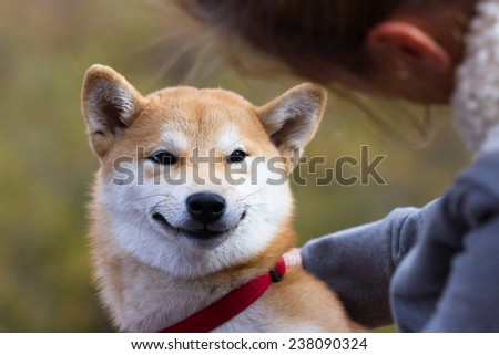 cute smiling shiva inu puppy outdoors with a autumn background - stock photo