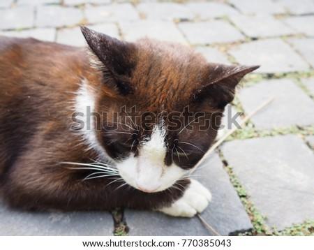 kitten not eating or drinking