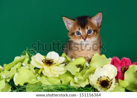 Cute somali kitten on the green background with flowers