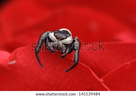 Cute spider - stock photo
