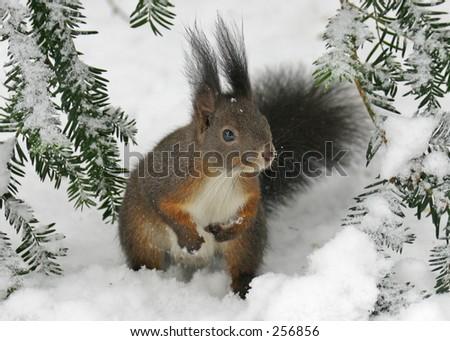Cute squirrel - stock photo
