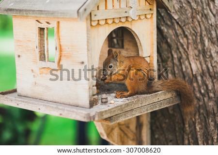 cute squirrel feeding - stock photo