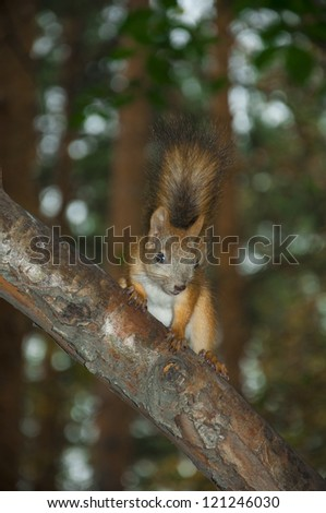 Cute squirrel in forest on the branch
